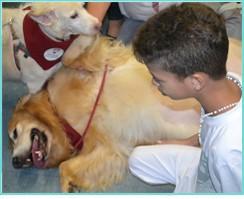 cães terapia crianças FCMSCSP 0001