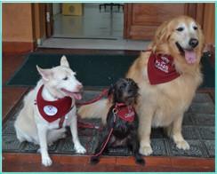 cães terapia crianças FCMSCSP 0002